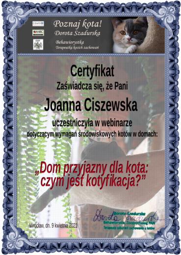 coape-dorota-szadurska-behawiorysta-szkolenie-kotyfikacja-rusori-house-hodowla-koty-syjamskie-orientalne-colorpoint
