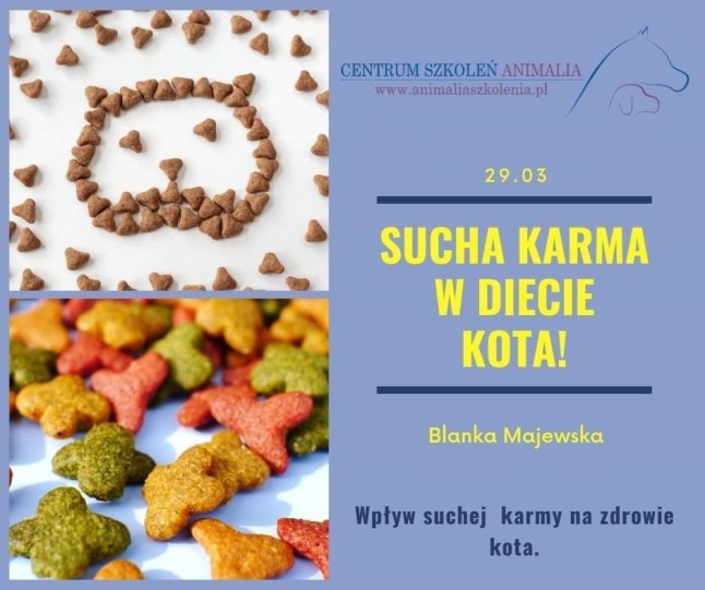 rusori-house-hodowla-kotów-syjamskich-orientalnych